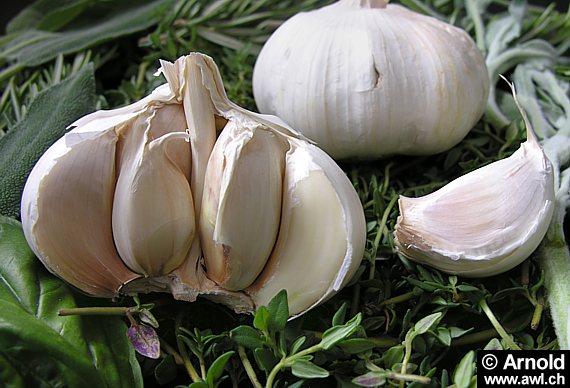 Bawang putih berkesan untuk diet