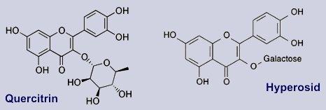 Hyperosid, Quercitrin
